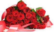 rose-flower-wallpaper-free_1920x1080_83174