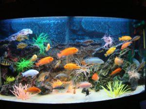 Несколько советов при заказе аквариума